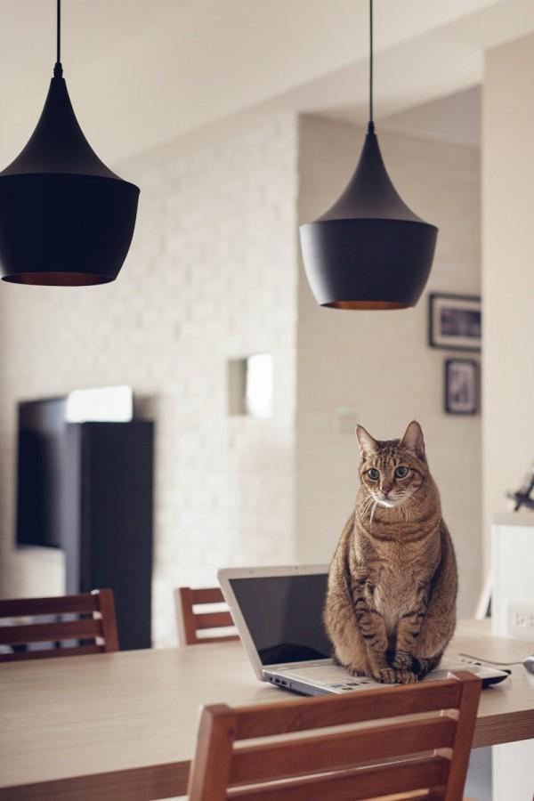 contemporary-apartment-for-feline (6)