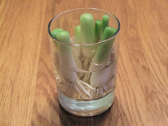 11 revivable vegetables (1)