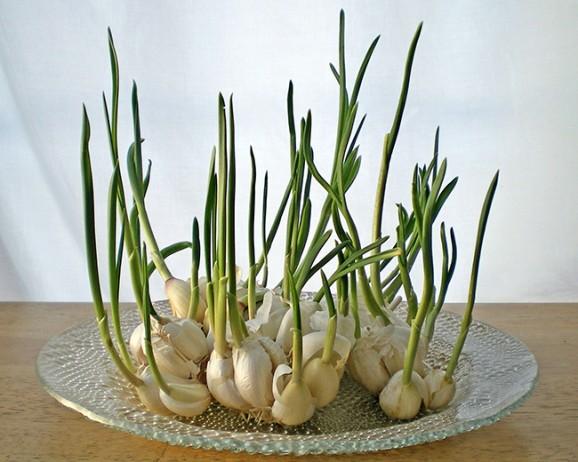 11 revivable vegetables (2)