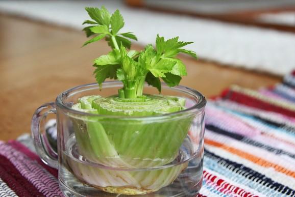 11 revivable vegetables (5)