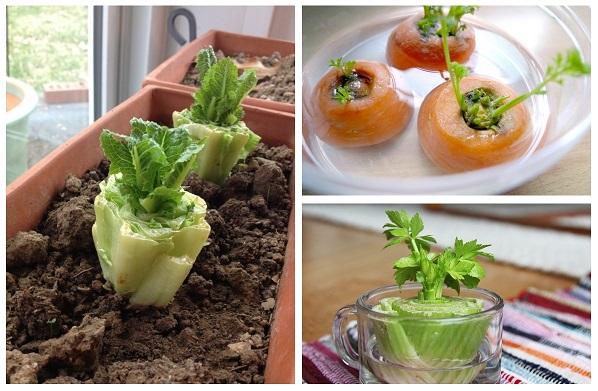 11-revivable-vegetables-6