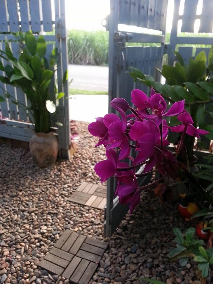 natural happy garden review (10)
