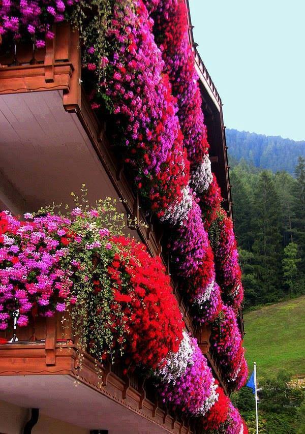 decorate exterior windows with flowers (1)