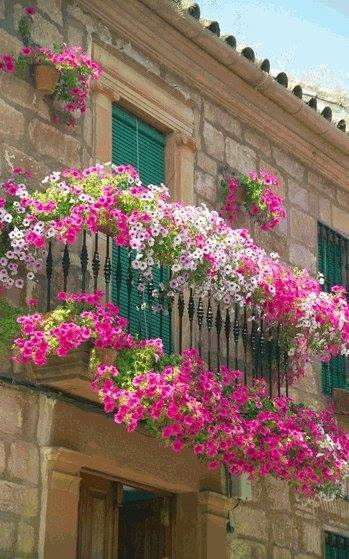 decorate exterior windows with flowers (3)