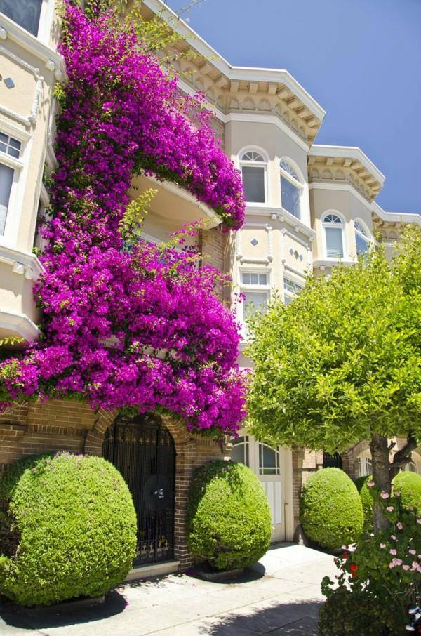 decorate exterior windows with flowers (4)