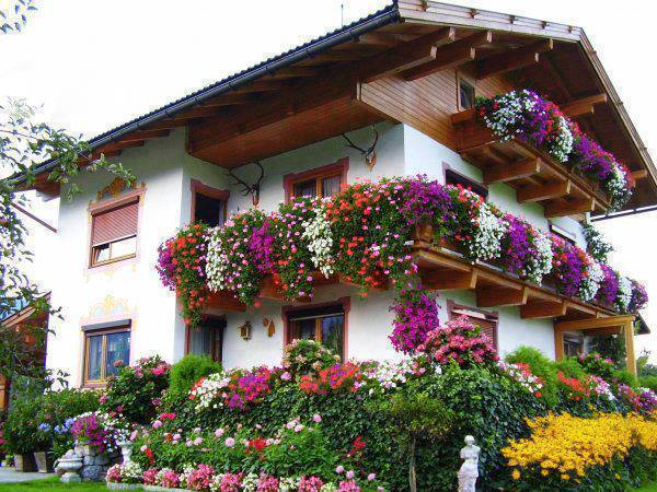 decorate exterior windows with flowers (5)