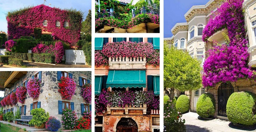 24-ideas-for-charming-exterior-flower-decoration (1)