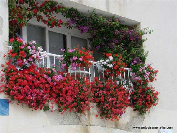 24-ideas-for-charming-exterior-flower-decoration (13)