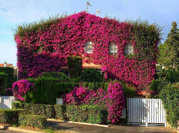 24-ideas-for-charming-exterior-flower-decoration (22)