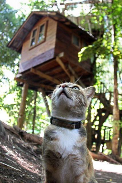 rabeang-pasak-chiangmai-treehouse-resort (9)