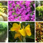 แนะนำ 10 ต้นไม้ริมรั้ว ที่นิยมปลูก สร้างธรรมชาติและสีเขียวให้กับบ้านเรา
