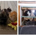 คุณพ่อสร้าง 'ที่หลบภัยหนาวให้แมว' เพื่อให้แมวจรจัดแถวบ้านเข้ามาอยู่อย่างอบอุ่น ในช่วงฤดูหนาว