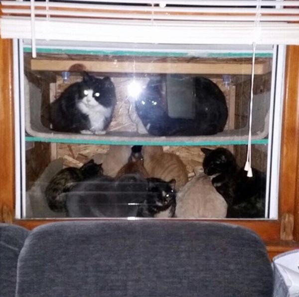 cataquarium-stray-cat-shelter-inside