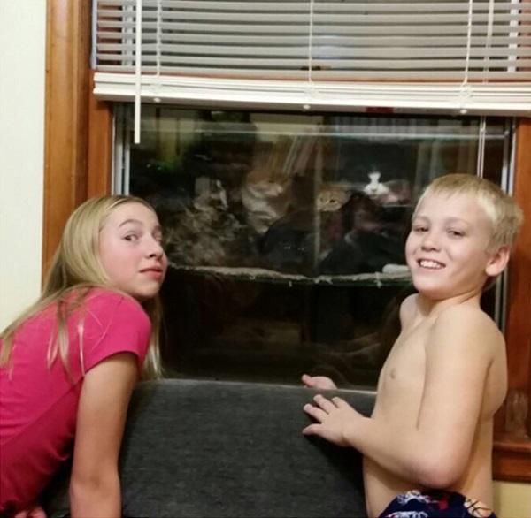 cataquarium-stray-cat-shelter-kids