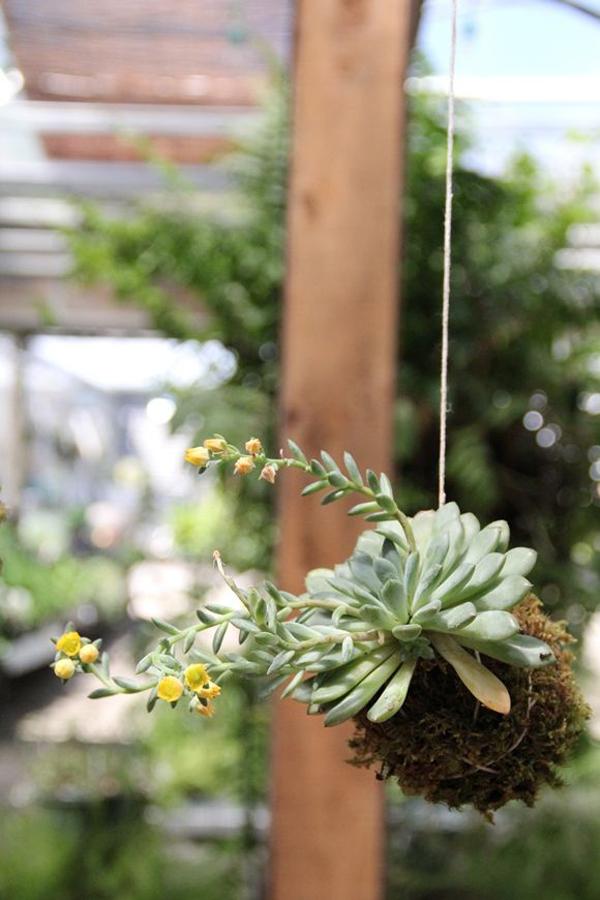 DIY-hanging-kokedama-string-gardens