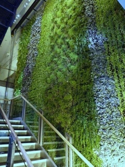 beautiful-green-living-wall-design