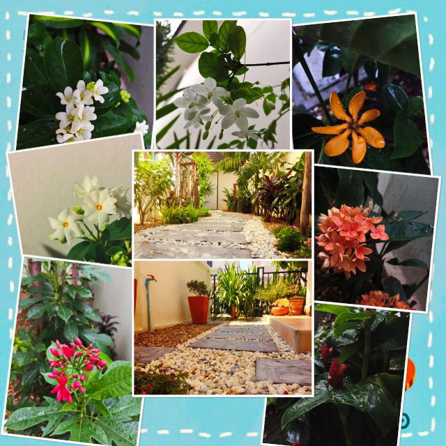 easy gardening by a beginner (1)