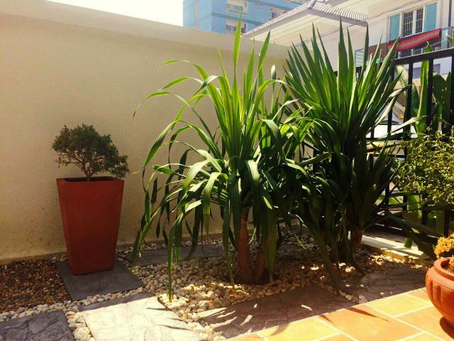easy gardening by a beginner (10)