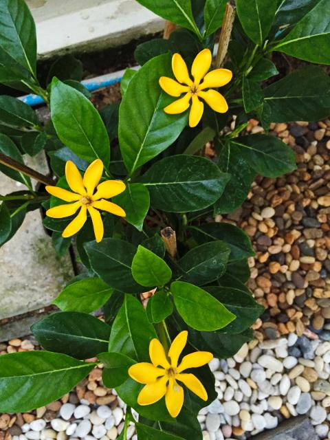 easy gardening by a beginner (2)