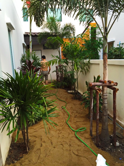 easy gardening by a beginner (4)