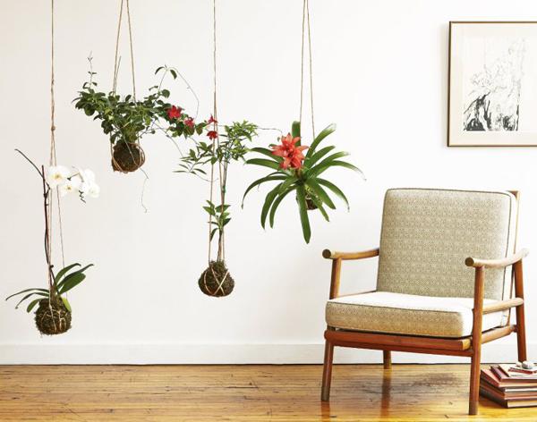indoor-kokedama-hanging-gardens