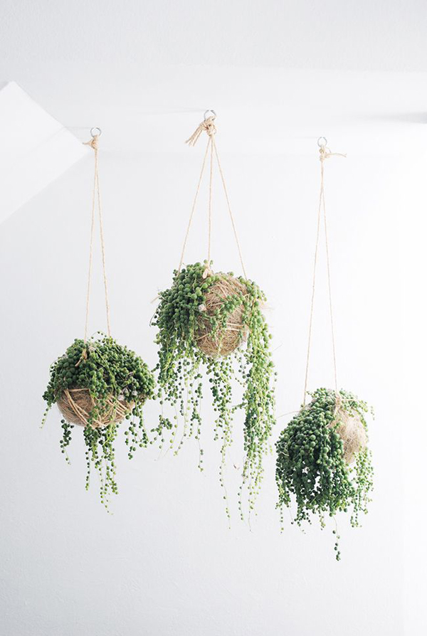 indoor-string-garden-plan