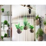 20 ไอเดีย ไม้กระถางห้อยแขวน สีสันของธรรมชาติ สร้างความร่มรื่นภายในบ้าน