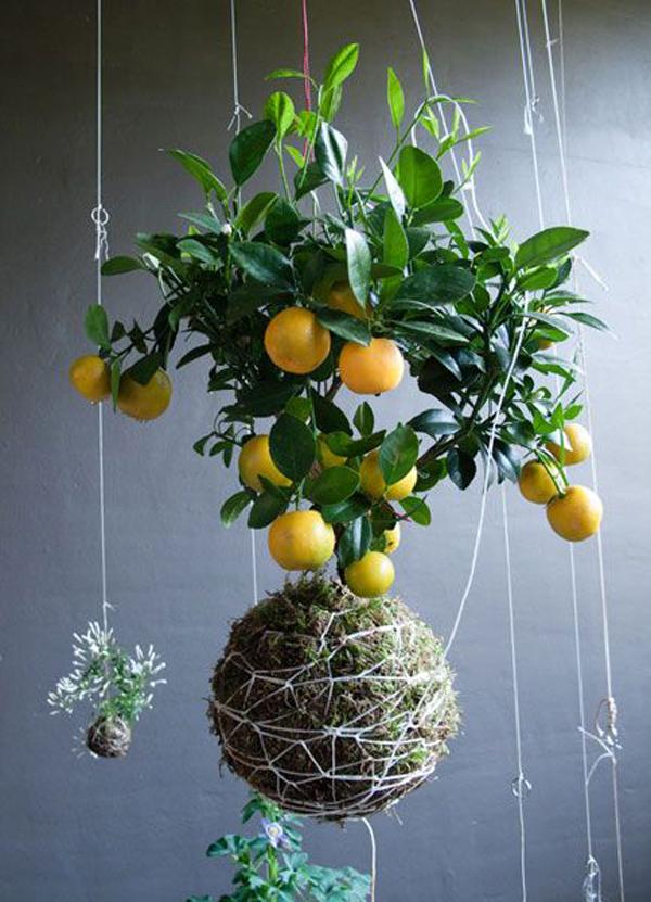 lemon-trees-string-garden