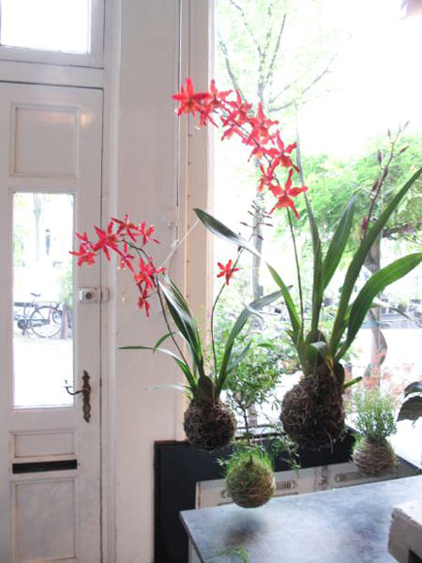 orchid-string-hanging-gardening