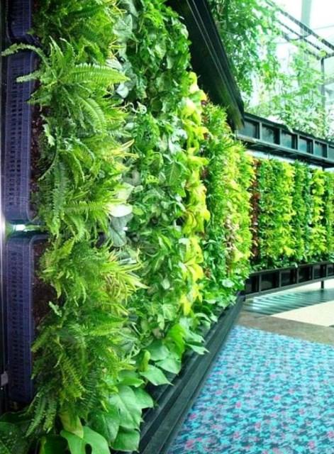 outdoor-green-living-walls
