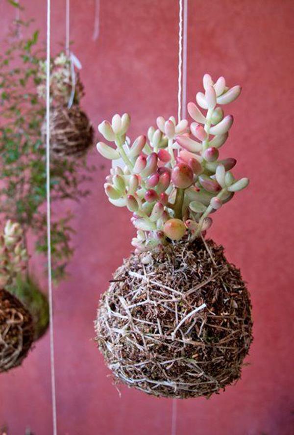 succulent-string-garden-ideas