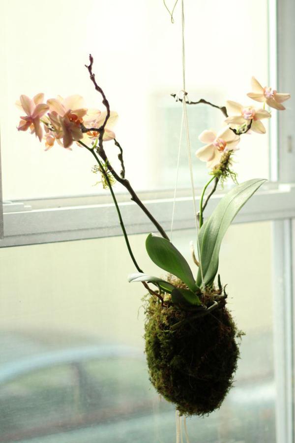 window-string-garden