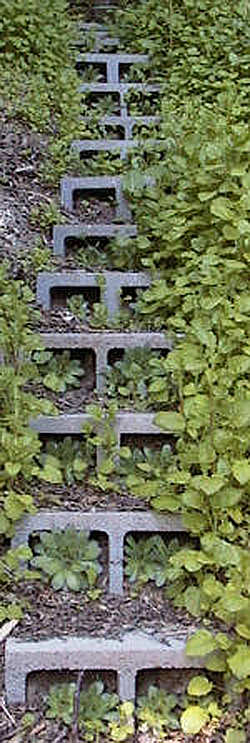 5 ways to use cinder blocks in the garden (4)