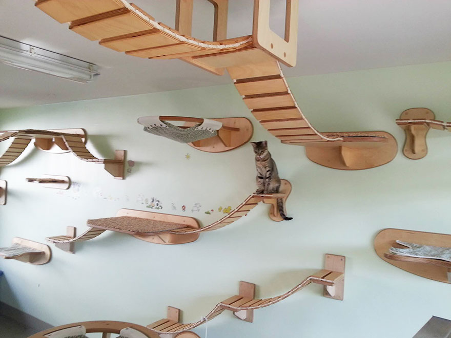 24-furniture-designs-for-cat-lovers (29)