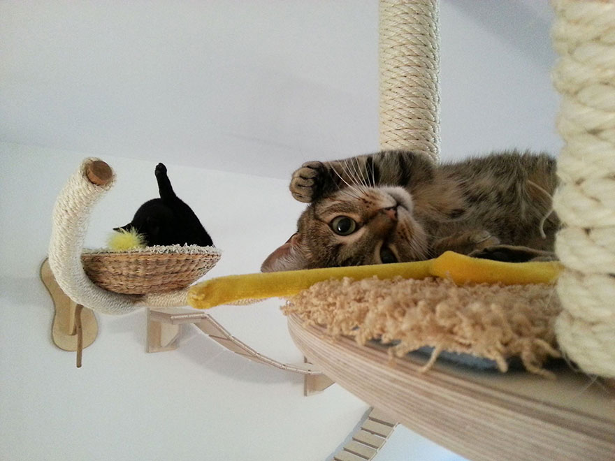24-furniture-designs-for-cat-lovers (30)