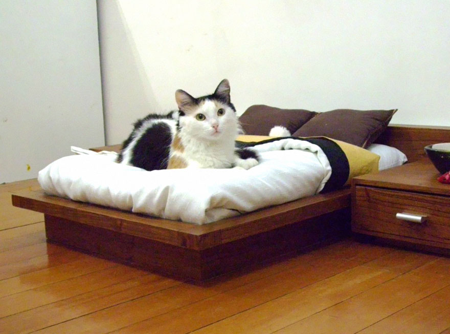 24-furniture-designs-for-cat-lovers (4)