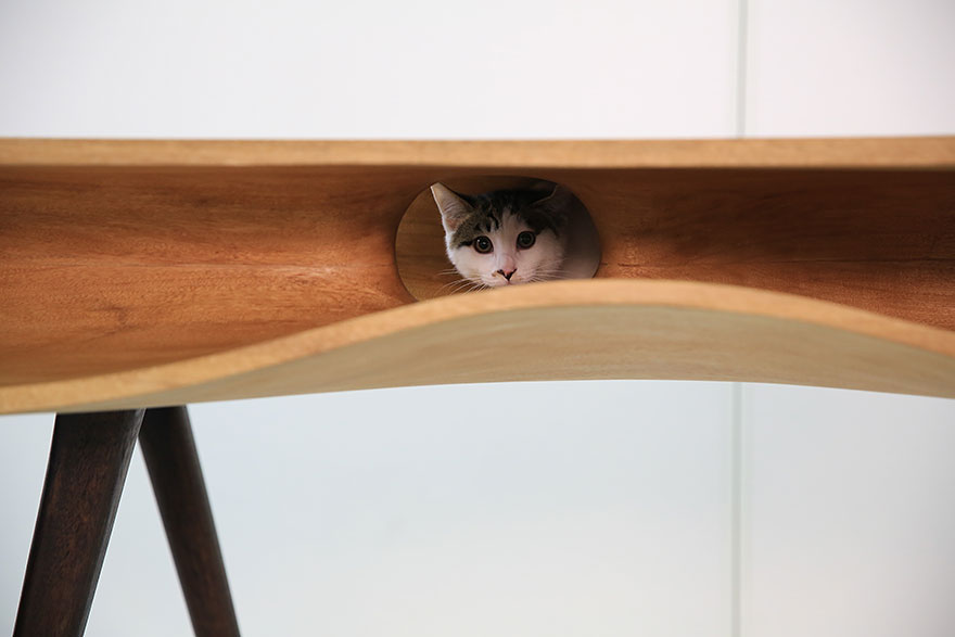 24-furniture-designs-for-cat-lovers (8)