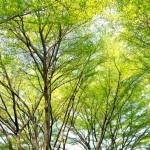 รู้ไว้ก่อนดีกว่าแก้!! 10 ต้นไม้ที่ควรปลูกให้ไกลจากตัวบ้าน เพราะอาจเกิดปัญหาหลายประการ