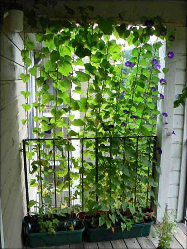 21 privacy screen in backyard garden ideas (15)