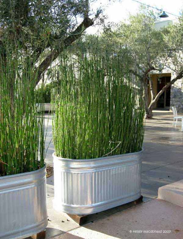 21 privacy screen in backyard garden ideas (16)