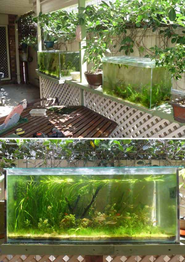 22-small-garden-backyard-aquarium-ideas (13)