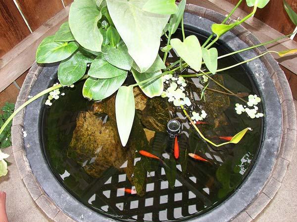 22-small-garden-backyard-aquarium-ideas (19)