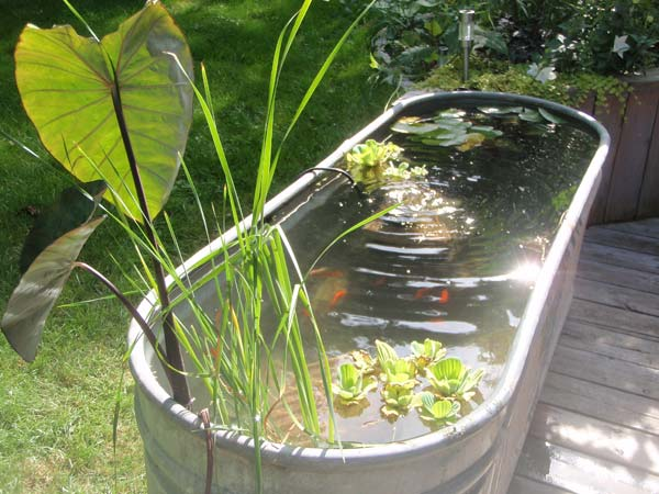 22-small-garden-backyard-aquarium-ideas (6)
