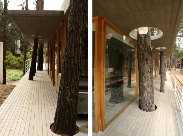 House-Among-Trees-05-1150x853