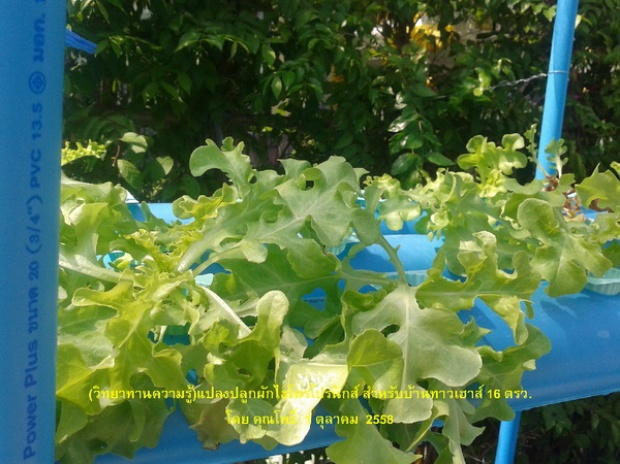 hydroponic veggie bed review (3)