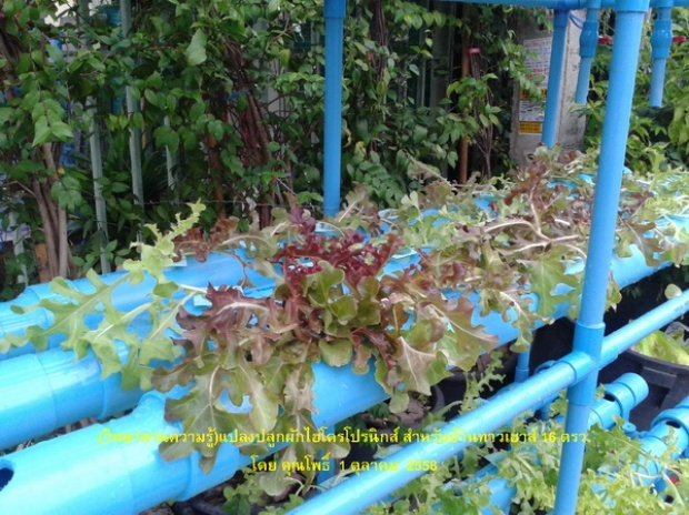 hydroponic veggie bed review (4)