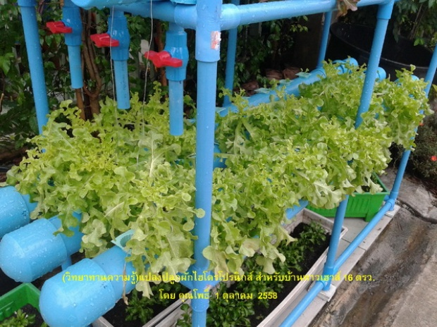 hydroponic veggie bed review (7)