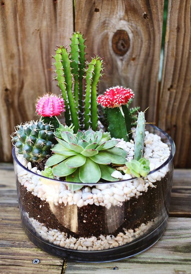 15 terrarium garden ideas (3)