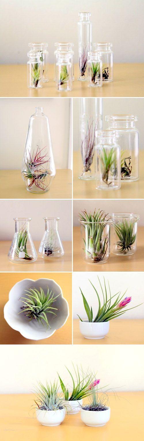 15 terrarium garden ideas (9)