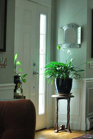 5 indoor plants (2)